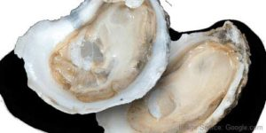 oysters boost sperm count